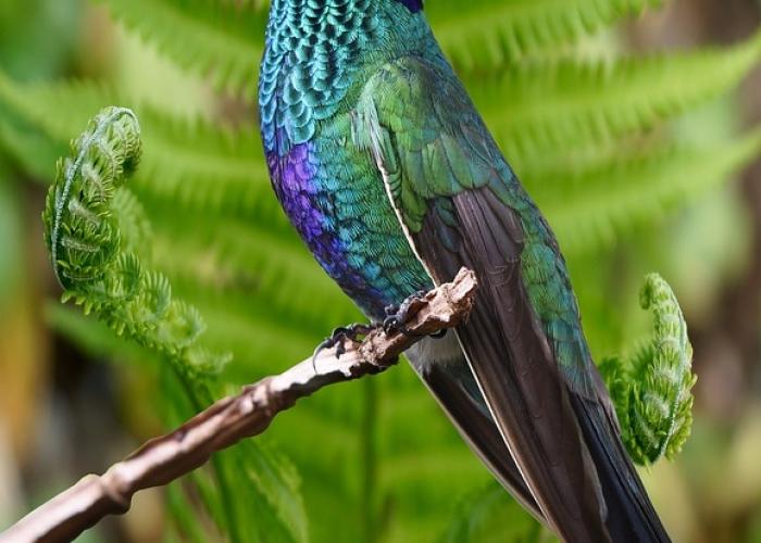 hummingbird-2503431_960_720