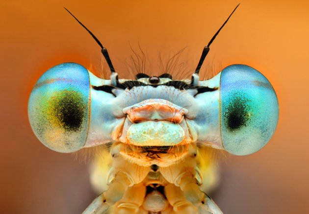 9-CATERS-Bugs-In-Shades-18-jpg_210420